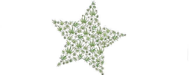 Hempstar-Logo
